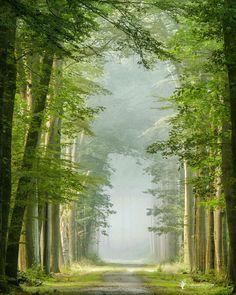 Green Portal by Lars van de Goor Photography Beautiful Forest, Beautiful Places, Beautiful Pictures, Landscape Photography, Nature Photography, Travel Photography, Tree Tunnel, Tree Forest, Forest Road