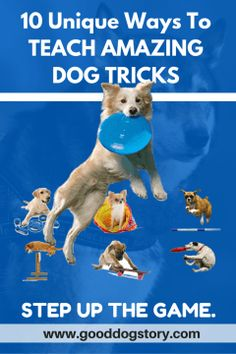 10 Unique Ways to Teach Amazing Dog Tricks | Impressive dog jumps, skateboarding, army crawl & so much more! Get them Free at http://www.gooddogstory.com/teach-amazing-dog-tricks/