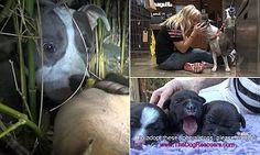 Watch the moment rescue team find homeless dog and her puppies in wild #DailyMail