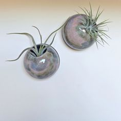 Ceramic Wall Planters Set Of 2 Stoneware Indoor By ZozPots On Etsy | Clay |  Pinterest | Ceramic Wall Planters, Stoneware And Planters