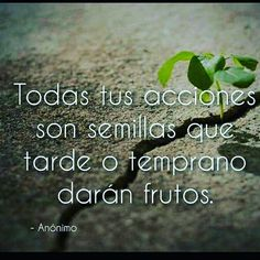 Todas tus acciones son semillas*