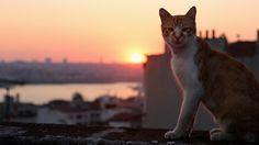 Em Istambul, na Turquia, os gatos circulam como se fossem os donos das ruas. E, segundo o documentário Gatos (Kedi), em exibição em alguns cinemas brasileiros e disponível no Youtube Red, eles de fato …