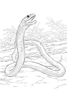 Black Mamba coloring page from Mamba Snake category. Select from 32015 printable crafts of cartoons, nature, animals, Bible and many more. Animal Coloring Pages, Snake Drawing, Snake Art, Sketches, Animal Drawings, Drawings, Art, Color, Snake Coloring Pages
