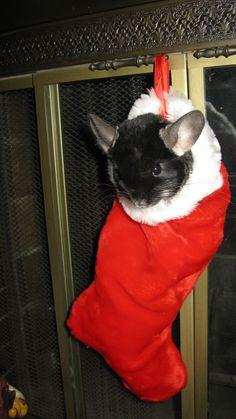 Teddy's first Christmas