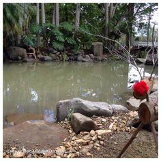 Moololah dipping pond