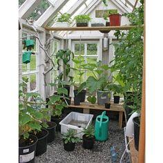 Av gamla fönster skapade norska Heidi sitt drömväxthus i vintage-stil. Conservatory Garden, Balcony Garden, Garden Beds, Balcony Ideas, Greenhouse Shed, Small Greenhouse, Garden Fencing, Garden Landscaping, Love Garden