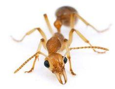 شركة نقل اثاث بالرياض ومكافحة الحشرات: شركة مكافحة النمل الابيض