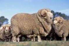 10 neuzeitlichen Konten der Tierverstümmelungen - http://bestelisten.com/10-neuzeitlichen-konten-der-tierverstummelungen/