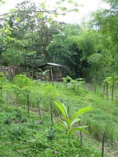 a goat house garden in Costa Rica