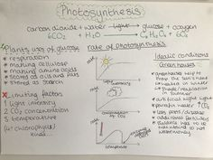 Gcse Biology photosynthesis notes revision Gcse Biology Revision, Igcse Biology, Gcse Physics, Gcse Chemistry, Physics And Mathematics, Science Biology, Life Science, Ap Biology, Science Notes
