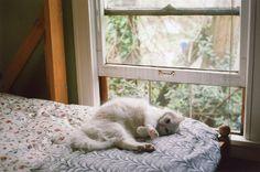 FlickrにSabrina.E無題ラブリー-KittyCats、。