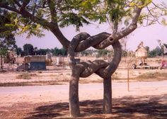 Is that a sailor's knot...made by the trees ?? lol