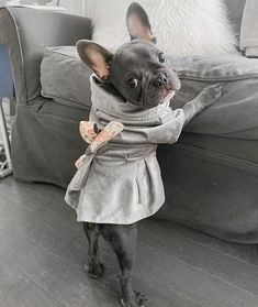 Baby French Bulldog, French Bulldog Pictures, French Bulldogs, Baby Bulldogs, English Bulldogs, Cute Dogs And Puppies, Baby Puppies, Corgi Puppies, Doggies
