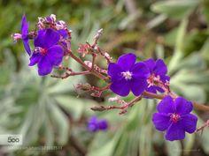 Purples by loureirogc #nature