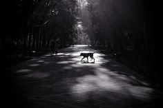 Утро в парке - null