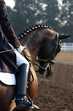 Dressage - you work at it for so. damn. long. you almost forget how cool it looks.