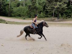 Woest paard