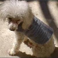 Manteau pour chien  Patron couture gratuit - Loisirs créatifs