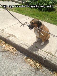 Dog hoards sticks