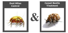 The team of Fantastic Pest Control is happy to announce the 2 new additions to our service portfolio - carpet beetle treatment and dust mites control. Organic Soil, Organic Gardening, Natural Pesticides, The Wooly, How To Attract Birds, Beneficial Insects, Organic Matter, Plant Species, Garden Pests