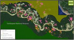 Gold mining shifts course of Peruvian river, 'will destroy' ecosystems Bolivia, Ecuador, Rainforests, Forest Landscape, Conservation, Habitats, Dinosaur Stuffed Animal, January, River