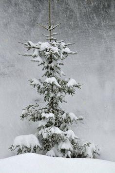 Winter's Delicate Touch, Gentle Winter