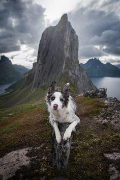 @izalyson | Segla Zootopia, Outdoor Photography, Beautiful Creatures, Cute Dogs, Best Friends, Mountains, Nature, Border Collies, Instagram