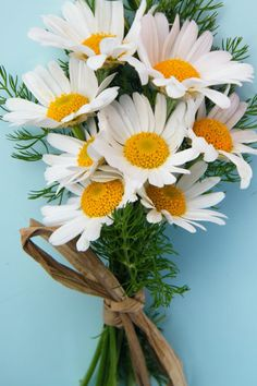 Bündel Gänseblümchen Daisy Gifts Ltd Driedflowercraft …. bunch of flowers Most Popular Flowers, Amazing Flowers, Bunch Of Flowers, Flowers In Hair, White Flowers, Paper Flowers, Plant Information, Same Day Flower Delivery, Large Plants