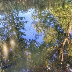 Small actions can have big reactions #thoughtfortheday #notakentoday! #river #reflection #riveravon #malmesbury #dogwalktherapy
