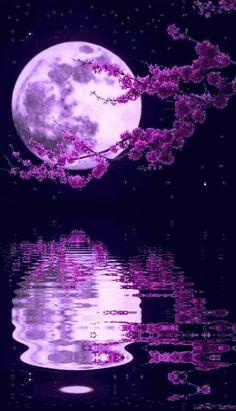 Beautiful moon with flowers Cute Wallpaper Backgrounds, Pretty Wallpapers, Galaxy Wallpaper, Beautiful Nature Wallpaper, Beautiful Moon, Beautiful Landscapes, Nature Pictures, Beautiful Pictures, Natur Wallpaper