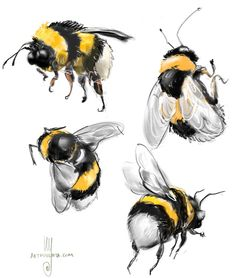 A gallery of sketches, cartoons, drawings and paintings by digital artist and illustrator Artmagenta. Watercolor Animals, Watercolor Paintings, Watercolour, Animal Drawings, Art Drawings, Bee Sketch, Illustration Inspiration, Bee Drawing, Bee Painting
