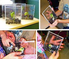 101 Gardening: Growing bean plants in CD cases. for kids