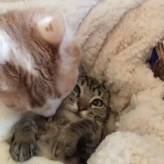 Vedi il video di Instagram di @cats_are_fr1ends • Piace a 2,574 persone