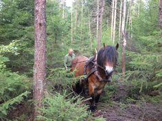 Working the Swedish forest - Nordsvensk