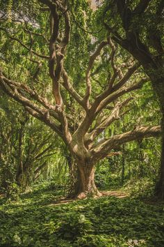 An amazing tree in the forest
