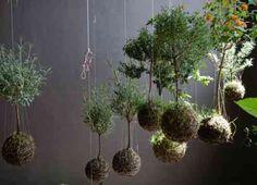 pot de plante en suspension