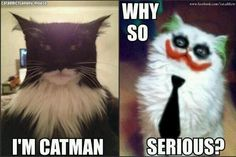 Batman Cat Meme