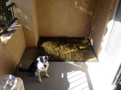 My dog's new patio/porch potty.  We bought two 24x48 dog crate pans from Petsmart, and lined them with kitty litter.  We went to Lowe's across the street and bought two strips of grass for $8.    Crafty, eh?