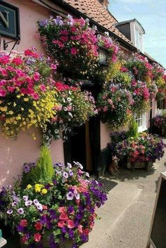 No front garden footage?border your front walls with overflowing colourful flowers in pots and hang up a selection of beautiful hanging baskets!