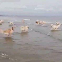 Adorable... La première fois que ce chien voit l'océan ❤