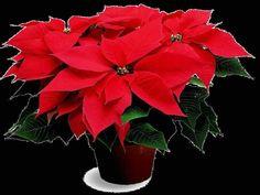 Vaso de Flor Vermelha / jahsaude