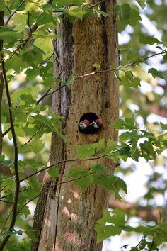 Brought to you by the 2017 Audubon Photography Awards. Bird Cages, Bird Nests, Humming Bird Feeders, Photography Awards, Bird Pictures, Brighten Your Day, Bird Art, Beautiful Birds, Bird Houses