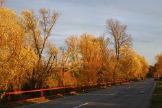 Lednice_november2011 Country Roads