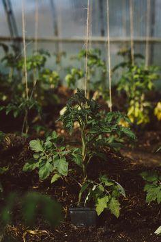 Organic Gardening In South Florida Organic Gardening, Gardening Tips, Gardening Services, Vegetable Garden, Garden Plants, Dream Garden, Permaculture, Farm Life, Botany