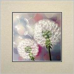 King Silk Art 100 Handmade Embroidery Multiple Unframed Two White Dandelions Oriental Wall Hanging Art Asian Decoration Tapestry Artwork Picture Gifts 36022W ** More info could be found at the image url.