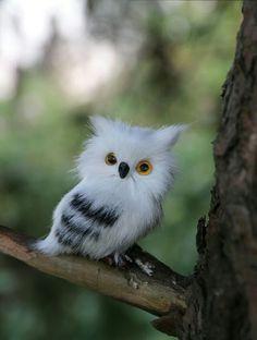 Beautiful Owl, Animals Beautiful, Baby Owls, Cute Baby Animals, Rare Animals, Animals And Pets, Plush Animals, Owl Pictures, Owl Bird