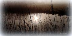 #fotografie #landschap #natuur #mist #zon #water #riet #Bolsward #Friesland