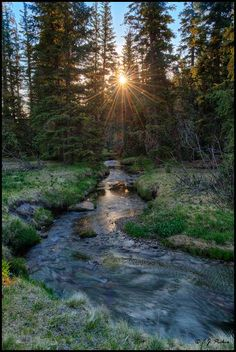 Mt Baldy Wilderness, Apache National Forest, White Mountains, Arizona. (Photo by E. J. Peiker)