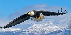 飛んでいるワシの翼の先端にある上向きの羽根