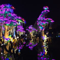 Dubai garden glow #dubai